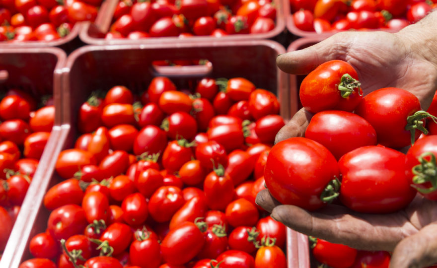 The story of our tomato has been told on Rai 3!